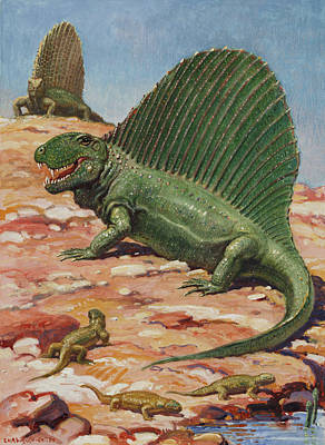 Dimetrodons Spines Could Grow Poster by Charles R. Knight
