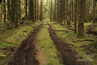 Dirt Road Through Forest Poster