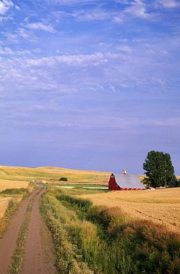 Dirt Road Through Wheat Field Poster