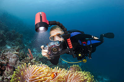 Diver And Anenome Fish Poster by Dave Fleetham