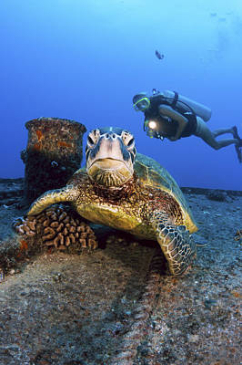 Diver And Green Sea Turtle Poster by Dave Fleetham - Printscapes