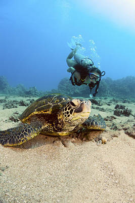 Diver And Green Sea Turtle IIi Poster by Dave Fleetham - Printscapes