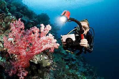 Diver Photographing Soft Coral Poster by Dave Fleetham