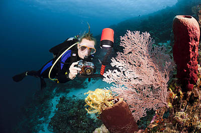 Diver Photographing Tube Sponge Poster