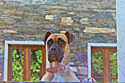 Dog Buldog Poster by Jenny Senra Pampin