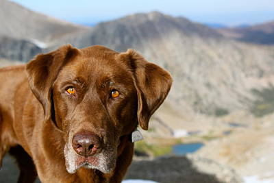 Dog On A Mountaintop Poster