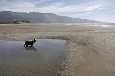 Dog Playing On Sandy Beach In Water Poster