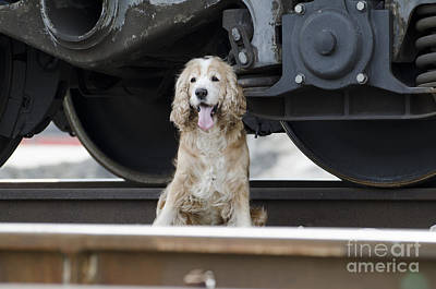 Dog Under A Train Wagon Poster