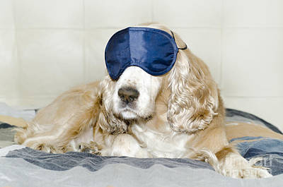 Dog With A Sleep Mask Poster