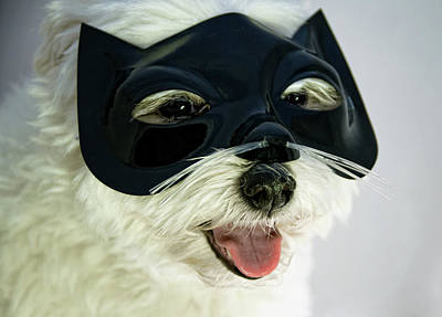 Dog With Cat Mask Poster by Carolyn Hebbard