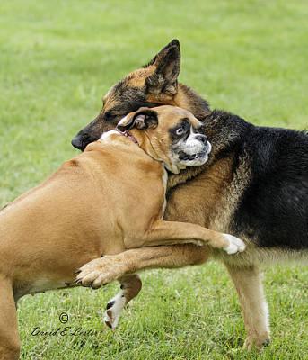 Doggie Love Poster by David Lester