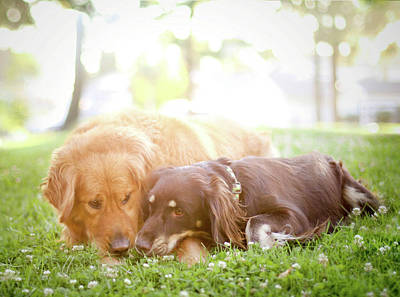 Dogs Snuggling Outside Being Cute Poster