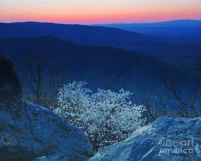 Dogwood Spring Sunset Blue Ridge Parkway Poster