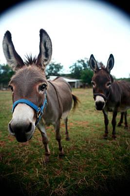 Doting Donkeys Poster by Lon Casler Bixby