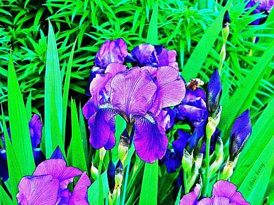 Double Blooming Iris Poster by Chris Berry