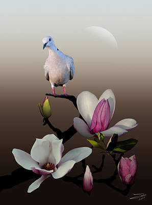 Dove And Magnolia Poster