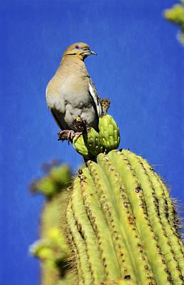 Dove Atop A Saguaro  Poster by Saija  Lehtonen