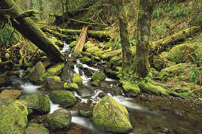 Downed Logs In Sorensen Creek Poster