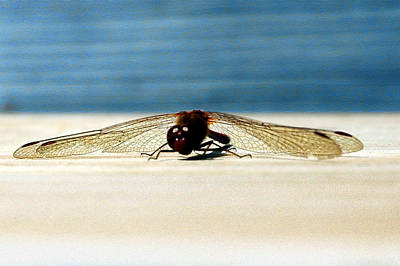 Dragon Fly Eyes Poster by LeeAnn McLaneGoetz McLaneGoetzStudioLLCcom