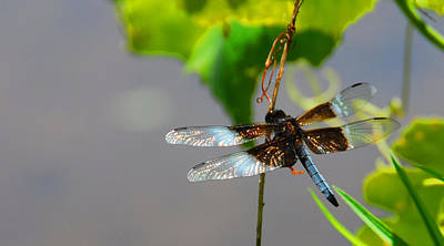 Poster featuring the photograph Dragonfly by Cindy Manero