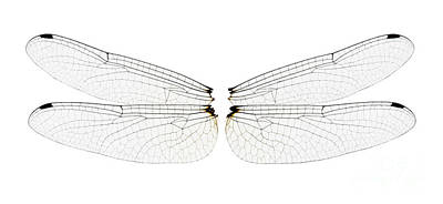 Dragonfly Wings Poster by Raul Gonzalez Perez