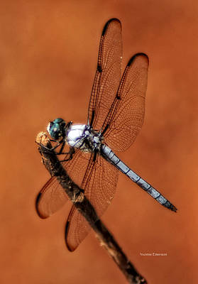 Poster featuring the photograph Dragonfly by Yvonne Emerson AKA RavenSoul