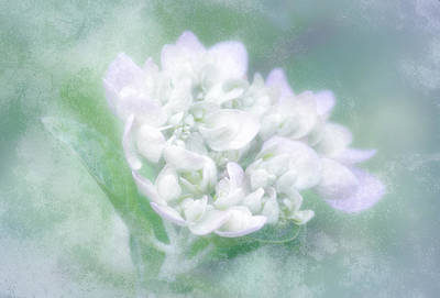 Dreaming Floral Poster by Brenda Bryant