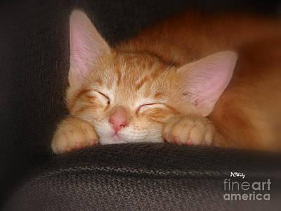Dreaming Kitten Poster