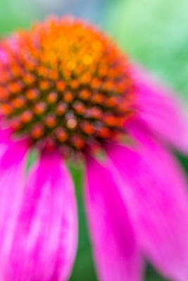 Dreamy Abstract Coneflower  Poster by Susan Stone
