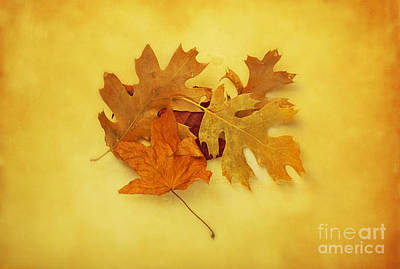 Dried Autumn Leaves Poster