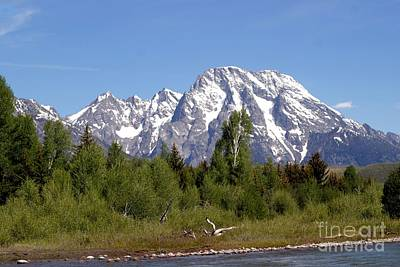 Driftwood And The Grand Tetons Poster by Living Color Photography Lorraine Lynch