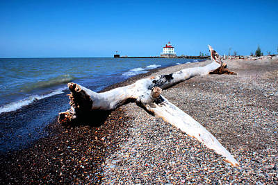 Poster featuring the photograph Driftwood At Erie by Michelle Joseph-Long
