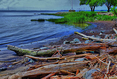 Driftwood On Shore Poster by Trudy Wilkerson