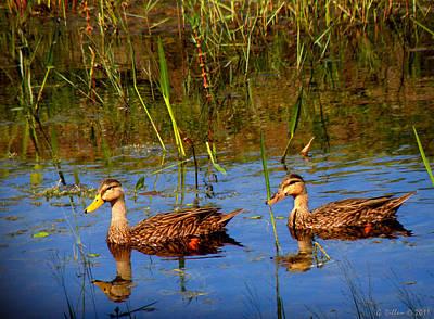 Ducks Afloat Poster