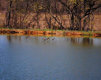 Ducks Flying Over Pond II Poster by Jai Johnson