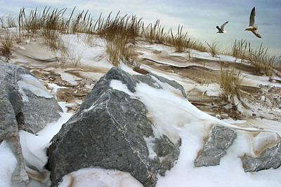 Dune And Gulls In Winter Poster by Randall Nyhof
