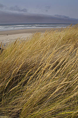 Dune Grass On The Oregon Coast Poster by Mick Anderson