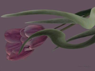 Dusty Tulips Wave Poster by Debra     Vatalaro
