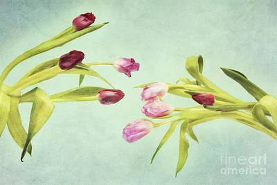Eager For Spring Poster by Priska Wettstein