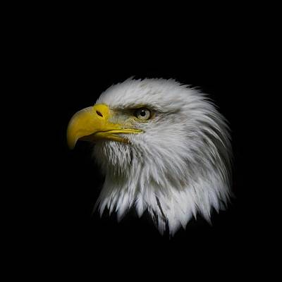 Poster featuring the photograph Eagle Head by Steve McKinzie