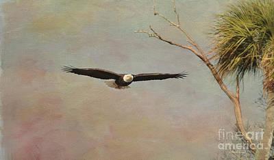 Eagle Soft Glide Poster by Deborah Benoit