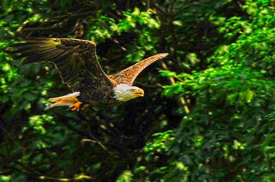 Poster featuring the photograph Eagle Taking Lunch To Her Babies by Randall Branham