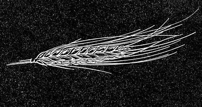 Ear Of Barley, Woodcut Poster by Gary Hincks