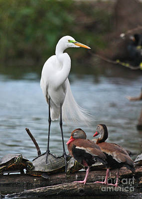 Poster featuring the photograph Egret - Best Friends by Luana K Perez