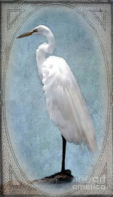 Egret 2 In A Vintage Frame Poster by Betty LaRue