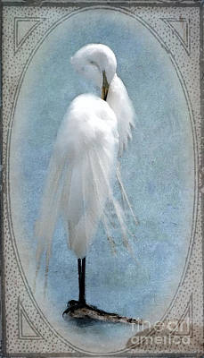 Egret In A Vintage Frame Poster by Betty LaRue