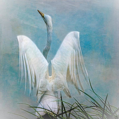 Egret Preparing To Launch Poster