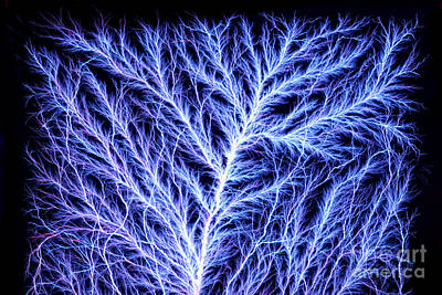 Electrical Discharge Lichtenberg Figure Poster