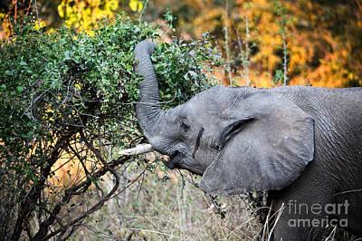 Elephant Detail Poster