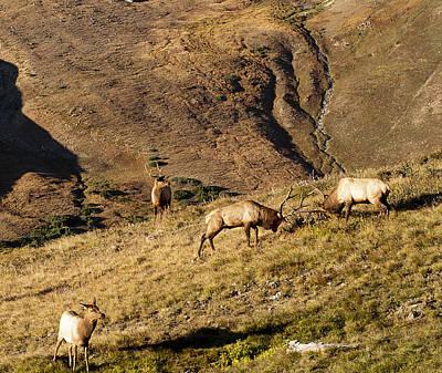 Elk Battle 2012 Poster